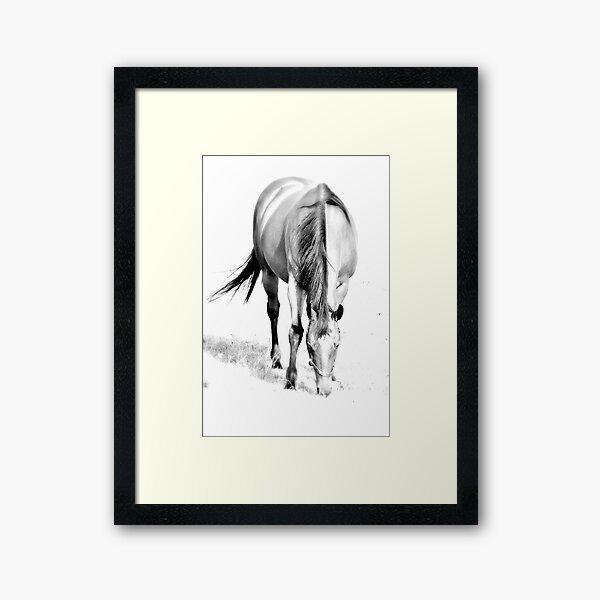 Horse C Framed Art Print