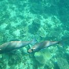 An underwater scene at Ningaloo Reef by georgieboy98
