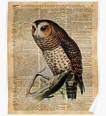 Owl Vintage Illustration Over Old Encyclopedia Page Poster
