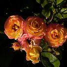 orange roses with dew by Jicha