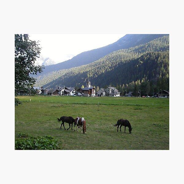 al pascolo... Monte Rosa 1800 metri - Piemonte - Italia - Europa--1500 visualizzaz maggio 2013-VETRINA RB EXPLORE 14 SETTEMBRE 2012 --- Photographic Print
