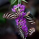 Butterfly Quartet by Gail Beerman