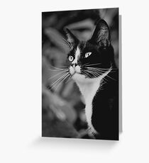 Just relaxing...  Greeting Card