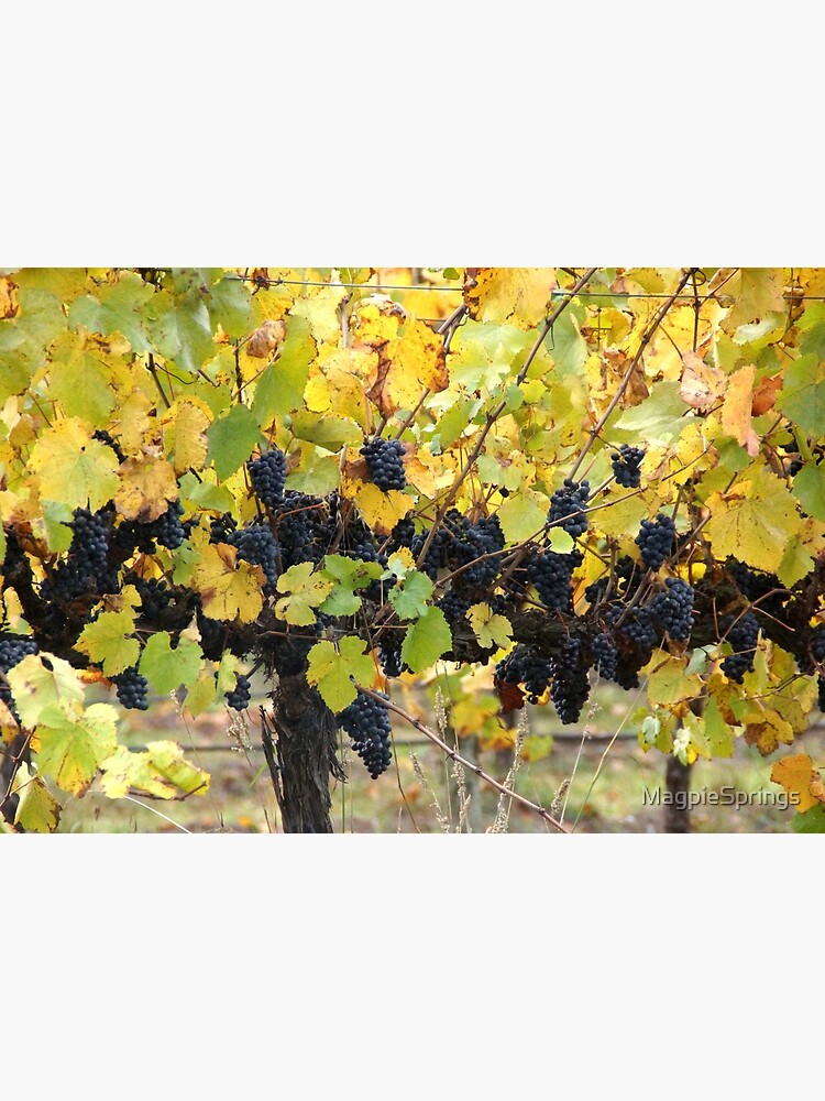 Fruity - Magpie Springs - Adelaide Hills Wine Region - Fleurieu Peninsula by South Australian artist Avril Thomas by MagpieSprings