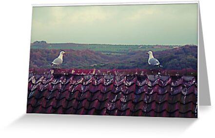 Seagulls chilling, Runswick Bay by Funkylikeabee