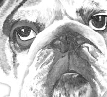 Portrait Of An American Bulldog In Black and White  Sticker