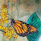 Catherine's Butterfly by Alexandra Felgate