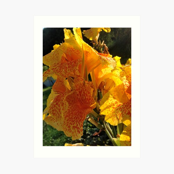 Autumn wonders.....You are a gift if you like !  by Andrew Brown Sugar. Art Print