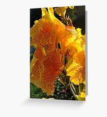 Autumn wonders.....You are a gift if you like !  by Andrew Brown Sugar. Greeting Card