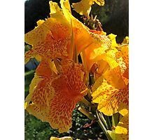Autumn wonders.....You are a gift if you like !  by Andrew Brown Sugar. Photographic Print
