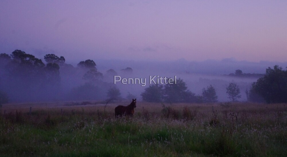 Dawn colt by Penny Kittel