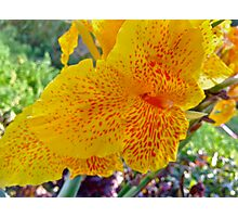 Autumn Desire.  ###  You are a gift if you like !  by Andrew Brown Sugar. Photographic Print