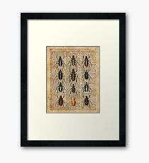 Beetles & Bugs,Insect Chart,Biological Illustration on Vintage Dictionary Book Page Background Framed Print