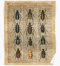 Beetles & Bugs,Insect Chart,Biological Illustration on Vintage Dictionary Book Page Background Poster