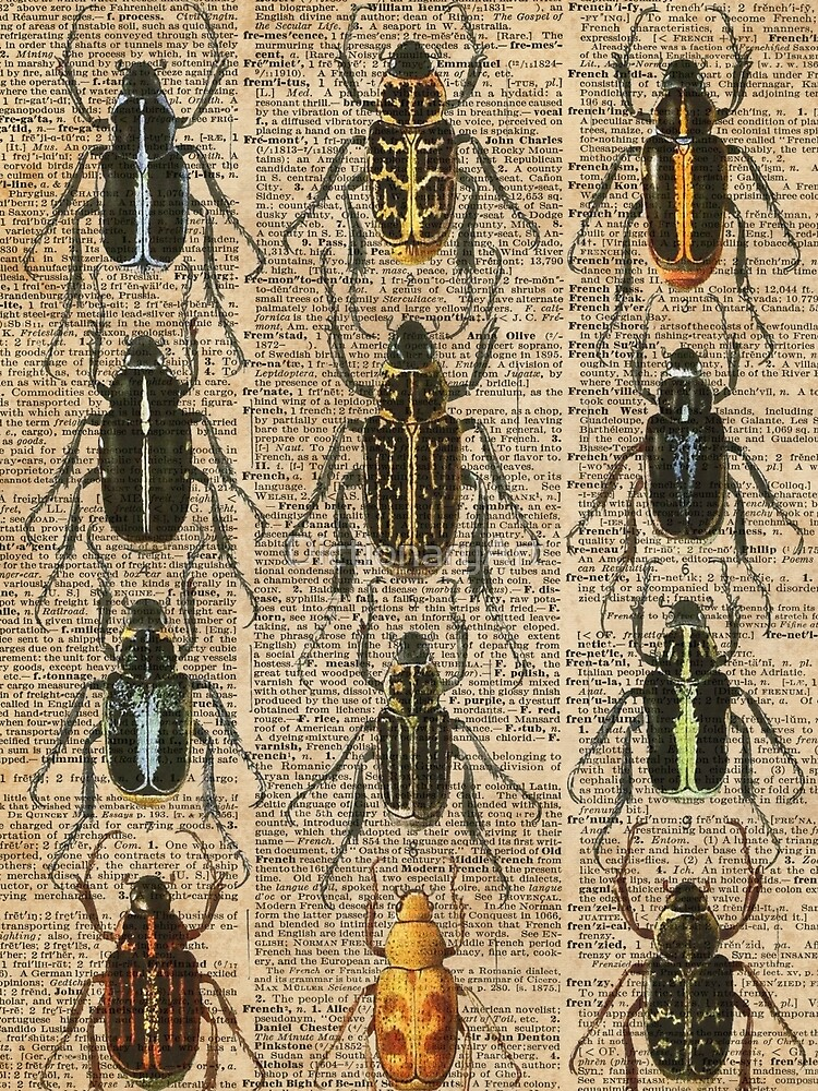 Beetles & Bugs,Insect Chart,Biological Illustration on Vintage Dictionary Book Page Background by DictionaryArt