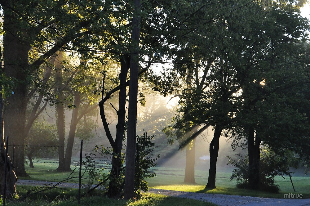 Tuesday Morning Trees and Mist by mltrue