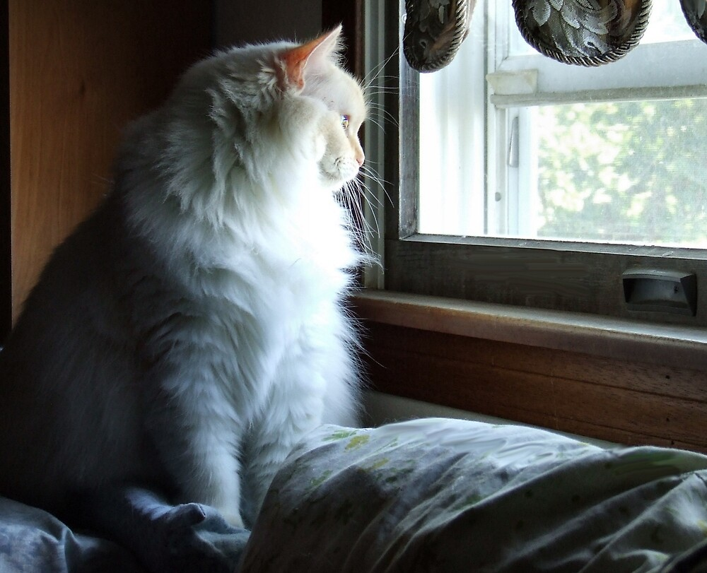 Bird Watching by Barb Miller