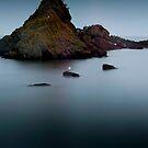 Rocks and Gulls, Near St Abbs, Scottish Borders by Iain MacLean