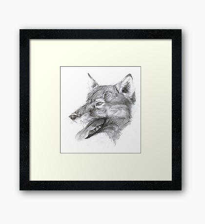 European wolf Framed Print