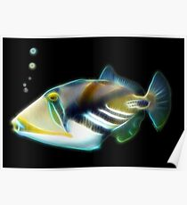 Picasso Trigger Fish for Cris Poster