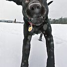 Filby in the Snow by Heather Buckley