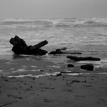 Driftwood 2 by GlockGirl40