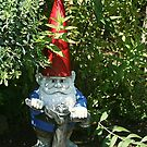 Gnome in Hiding by Monnie Ryan