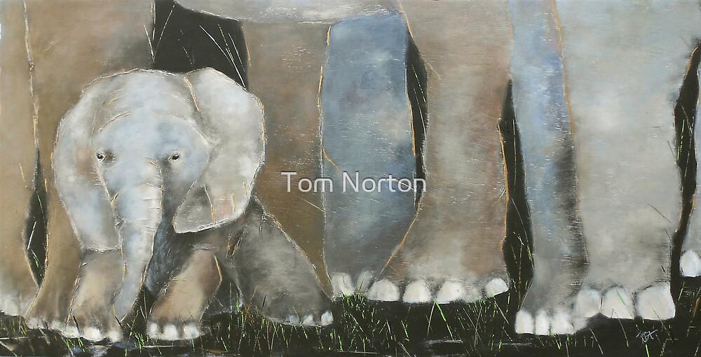 Baby Elephant 2 by Tom Norton