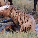 Cooling Down at the Waterhole by Robbie Knight
