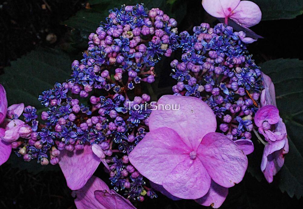 Bright Hydrangea  by Tori Snow