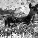 The Fawn - In The Wild by Roger Jewell