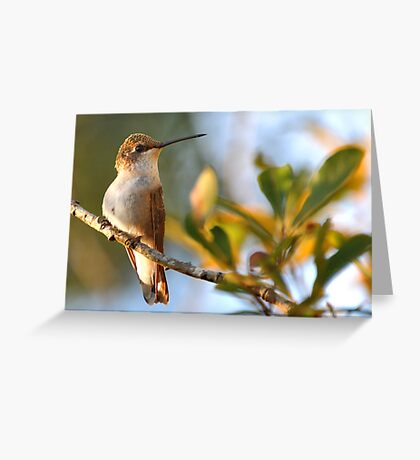 Who're You Lookin' At? Greeting Card