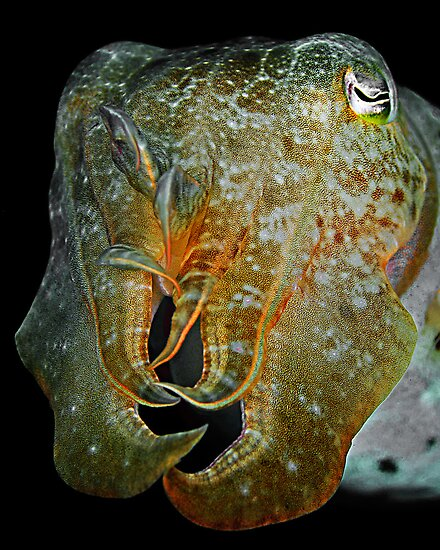 Cuttlefish by Henry Jager