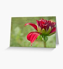 Red Dress Greeting Card