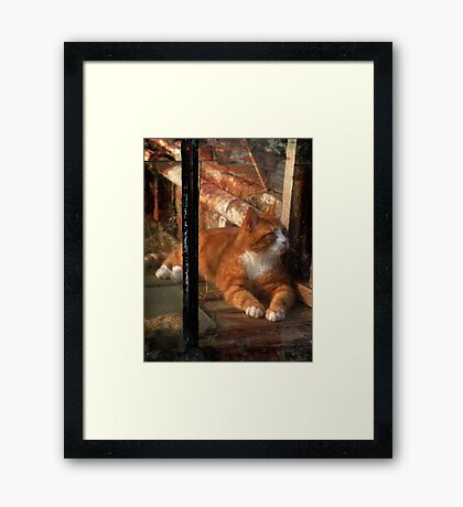 thomas in the greenhouse Framed Print