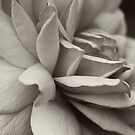 Rose in Mono by Debbie-Stanger