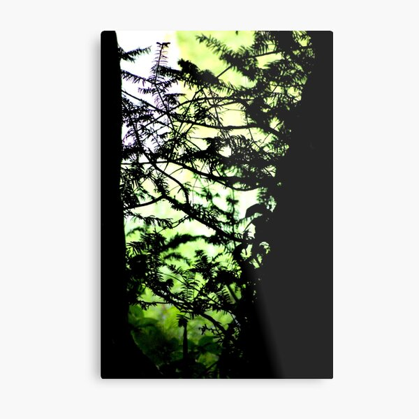 Shadows of the Yew Metal Print