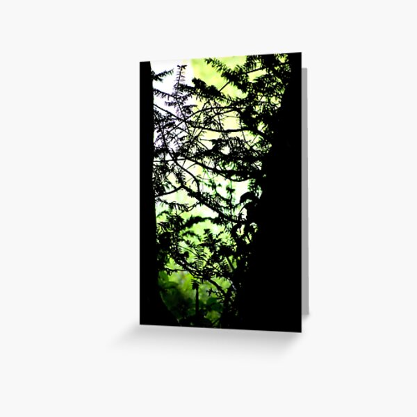 Shadows of the Yew Greeting Card