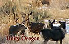Muley Antics by Betty  Town Duncan