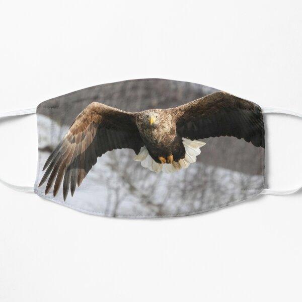 White tailed eagle Masque sans plis