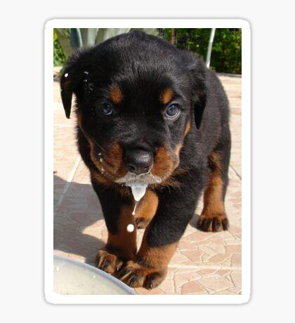 Cute Rottweiler Puppy Lapping Milk Sticker