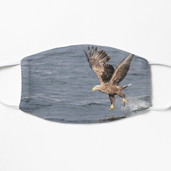 White-tailed eagle's successful fishing Masque sans plis