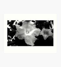 Squash Blossoms _F Art Print