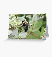 Bee and Flower Close-Up, New York Botanical Garden, Bronx, New York Greeting Card