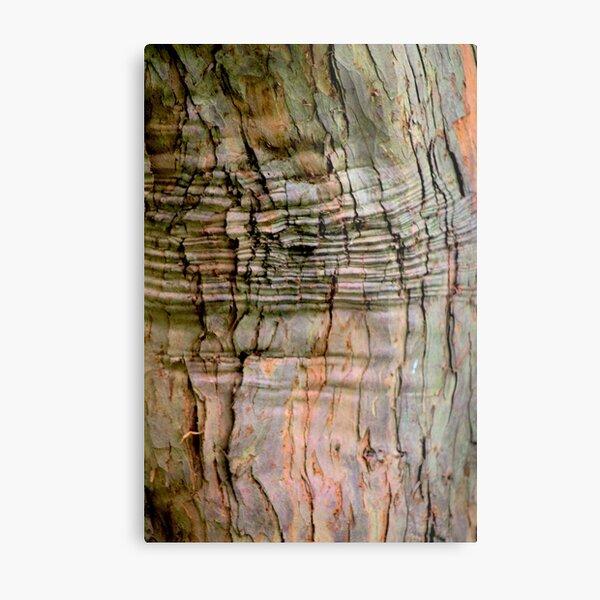 Yew tree bark texture Metal Print