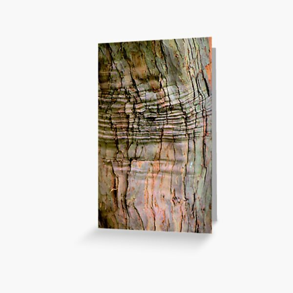 Yew tree bark texture Greeting Card