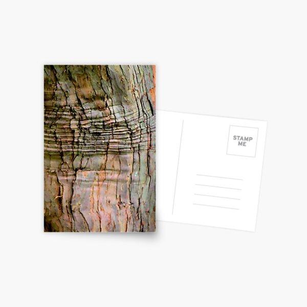 Yew tree bark texture Postcard