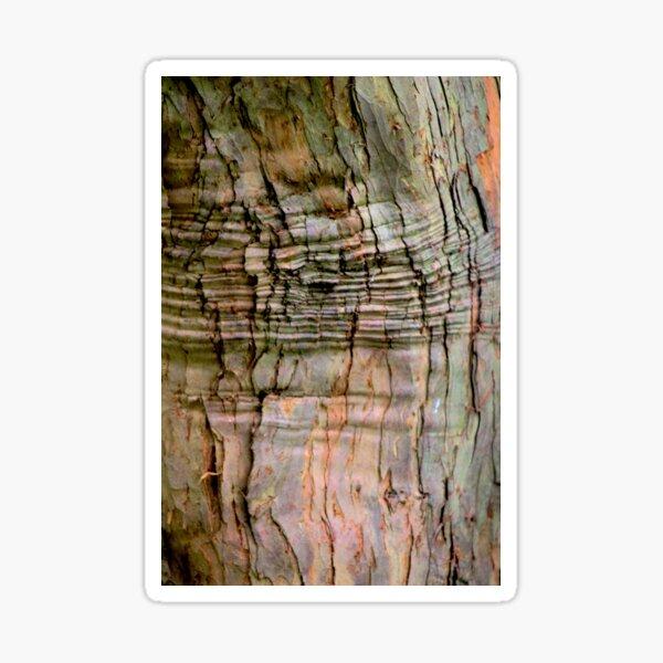 Yew tree bark texture Sticker