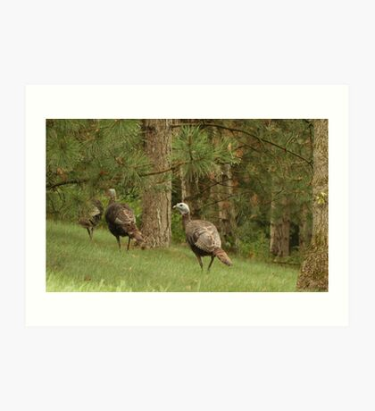 Holy Hill Turkeys Art Print