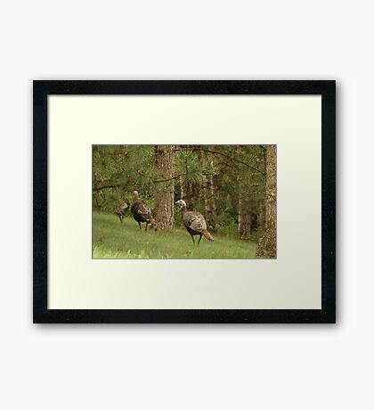 Holy Hill Turkeys Framed Print